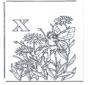 Alfabeto X