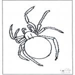 Animales - Araña