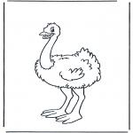 Animales - Avestruz 1