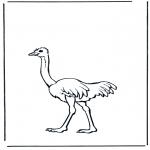 Animales - Avestruz 2