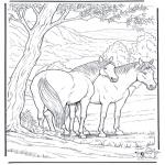 Animales - Caballo 6