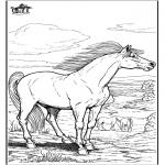 Animales - Caballo 9