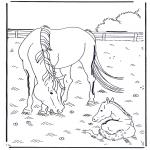 Animales - Caballo y potro
