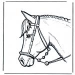 Animales - Cabeza de caballo 2