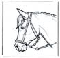 Cabeza de caballo 2