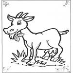 Animales - Cabra 2