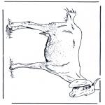 Animales - Cabra