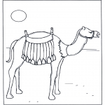 Animales - Camello al sol