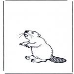 Animales - Castor