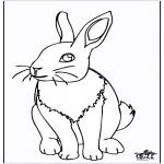 Animales - Conejo 4