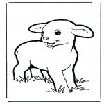 Animales - Corderito 1