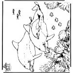 Animales - Delfines 5