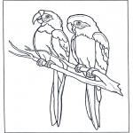 Animales - Dos cacatúas