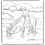 Animales - En el agua