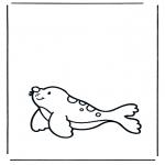 Animales - Foca 1