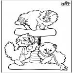 Animales - Gatos pequeños
