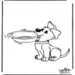 Animales - Hond