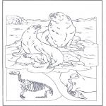 Animales - Leones marinos