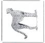 Leopardo de caza
