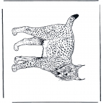 Animales - Lince