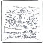 Animales - Marmota