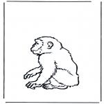 Animales - Mono 2