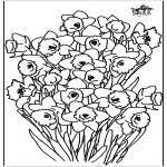 Diversos - Narciso