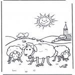 Animales - Ovejas al sol