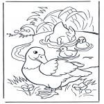 Animales - Patos