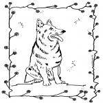 Animales - Perro 4