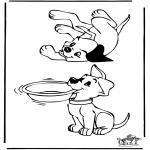 Animales - Perros 3
