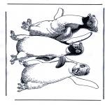 Animales - Pingüino 1