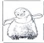 Pingüino 3