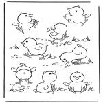 Animales - Pollitos