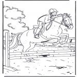 Animales - Santando a caballo
