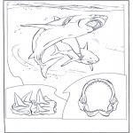 Animales - Tiburón blanco