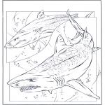 Animales - Tiburones