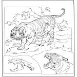 Animales - Tigre 3