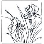 Diversos - Violetas
